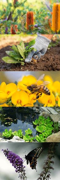 Biodiverse garden