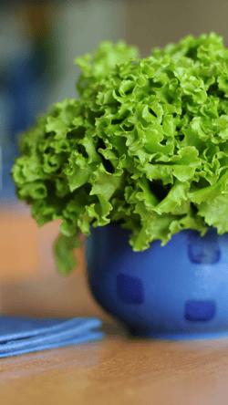 Blog-Lettuce-Pot
