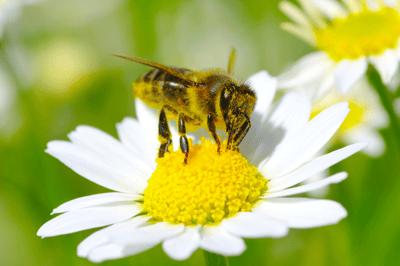 GB-  Bee
