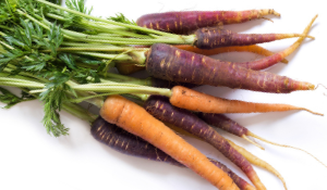 Colourful bunch of carrots