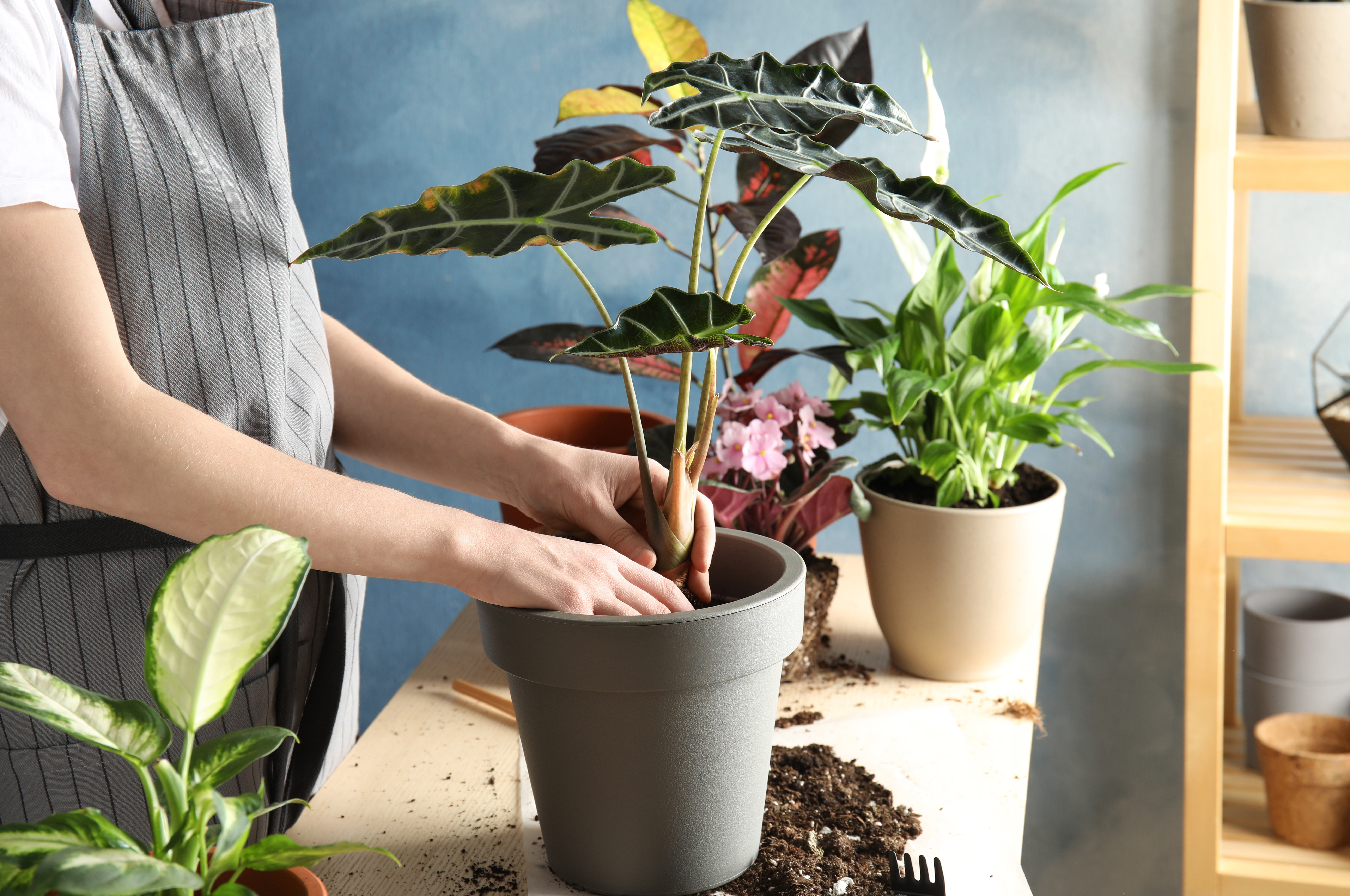 Potting Indoor Plants